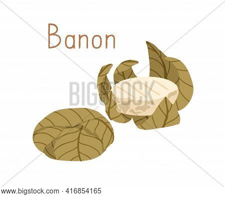 French Cheese Wheels Of Banon Wrapped In Chestnut Leaf. Whole Rounds Of Gourmet Soft Chees. Colored