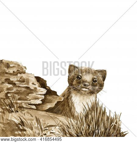 Wild Weasel In The Forest. Watercolor Illustration. Wildlife Animal By The Log. European Brown Stoat