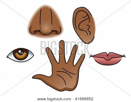A cartoon style Illustration depicting the 5 senses. poster
