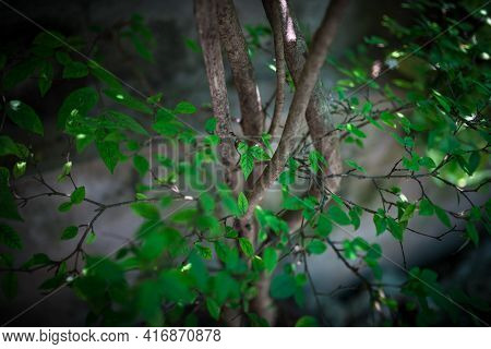Green Bushes Background With Fresh Leaves Texture For Relaxing Emotional