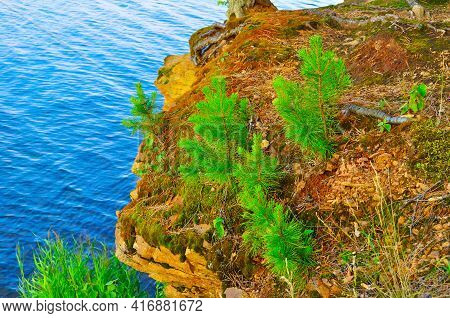 Cliff forest landscape.Small pine trees on the edge of a cliff on the background of blue water,pine trees near the cliff