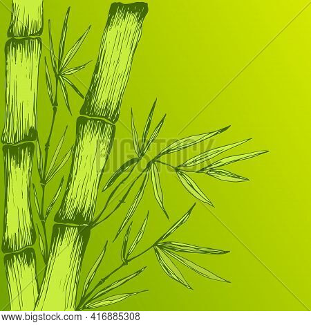 Colorful Green Juicy Bamboo Leaves Branches Stem Decorative Frame With Place For Text. Pattern Isola