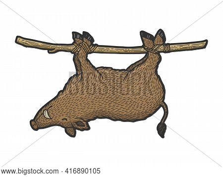 Carrying Dead Boar On Stick From Hunt Color Sketch Engraving Vector Illustration. T-shirt Apparel Pr