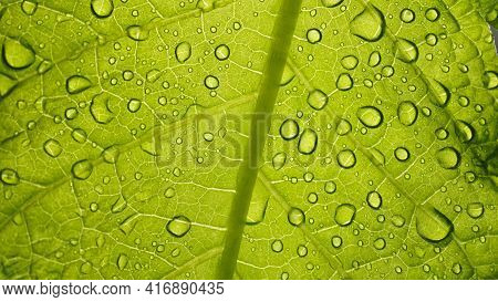 Macro Photo Of Green Leaf Texture With Rain Or Dew Drops, Leaf Close-up, Natural Green Banner.natura