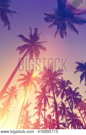 Tropical Palm Tree With Sun Light On Sunset Sky And Cloud With Colorful Bokeh Abstract Background.