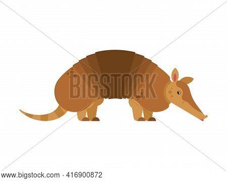 Armadillo Isolated. Animal Armor-clad Vector Illustration. Wildlife
