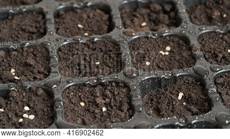 Planting Seedlings At Home,close-up Container For Seedlings With Plant Seeds And Water Drops.organic