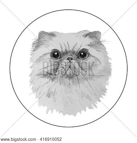 Vector Sketch Of The Head Of The Persian Cat. Isolated Image On White Background