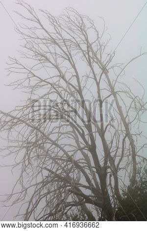Leafless Dormant Tree Branches Surrounded By Thick Fog Taken In A Rural Temperate Forest