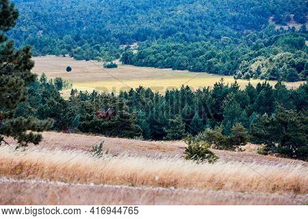 Dry Grass On Field, Green Forest. Autumn Or Summer Season. Hilly Terrain Greenery And Lovely Nature