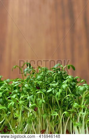 Micro-green Plant Sprouts On A Wooden Background. Radish Micro Green. Assortment Of Micro-greenery.