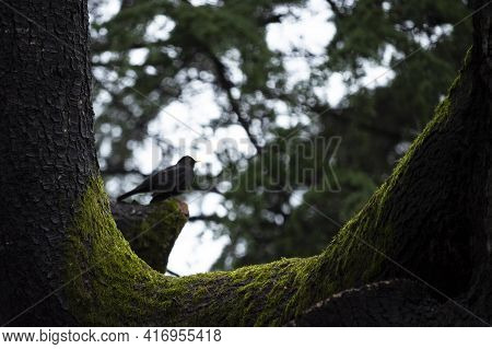 A Dark Magical Forest With Green Moss On The Tree Trunk. Close-up Of Moss And Bark. A Blurry Outline