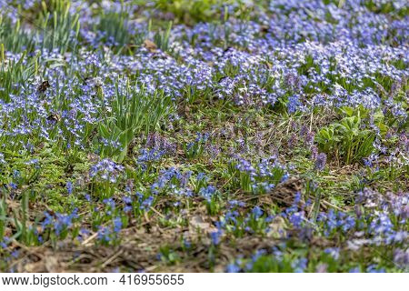 Picturesque Meadow With Bright Flowers In Early Spring