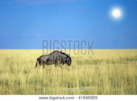 Antelope Gnu