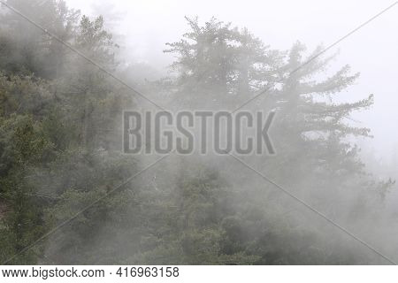 Spooky Like Forest Including Pine Trees Surrounded By Fog During A Rain Storm Taken At An Alpine Con