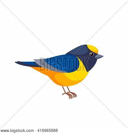 Violaceous Euphonia Is A Small Passerine Bird In The True Finch Family. Yellow Throated Euphonia Hir