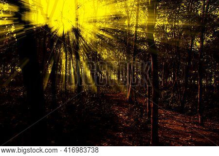 Sunlight Coming Through The Forest Sunbeam In The Forest