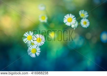 Beautiful White Flowers In Spring In A Forest Close-up In Sunlight In Nature. Spring Forest Landscap