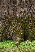 Tree bark texture poster
