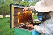Beekeeper working in his apiary with his bees poster