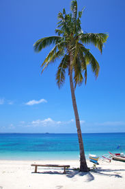 Palm Tree On A White Sand Tropical Beach On Malapascua Island, Philippines