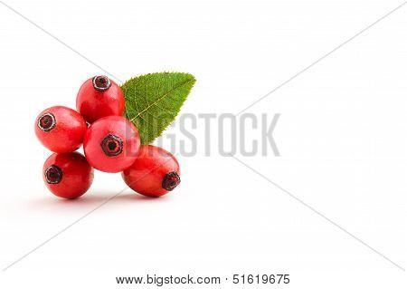 Rosehip Berries With Leaves.