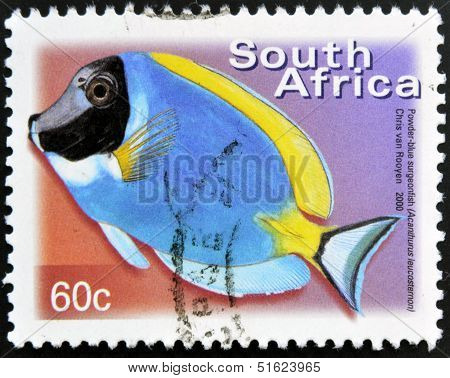 A stamp printed in RSA shows powder blue surgeonfish Acanthurus leucosternon