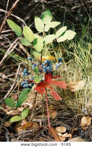 Leaves And Berries