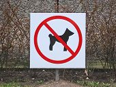 sign – dogs not allowed. poster