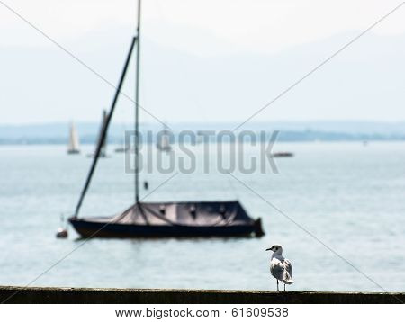 Coastal sea-gull with empty boat. Bavaria Germany. poster