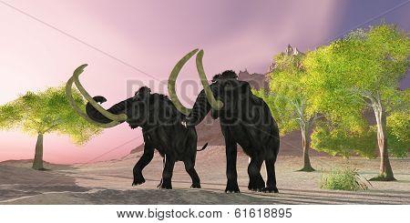 Woolly Mammoth Morning