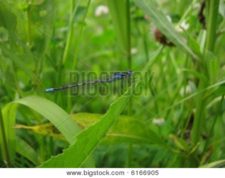Dragonfly amongst herbal jungle