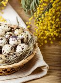 Quail eggs with mimosa branch on wooden table poster