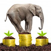 Big Elephant on a growing pile of golden coins. Strong investments concept. poster