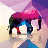 Geometric polygonal elephant, pattern design, vector illustration poster