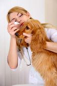 Beautiful young female veterinarian with dog in clinic poster