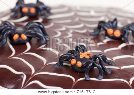 Web Scake With Spiders