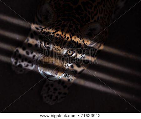Jaguar In The Dark