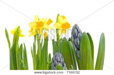 Spring Flowers Over White Background