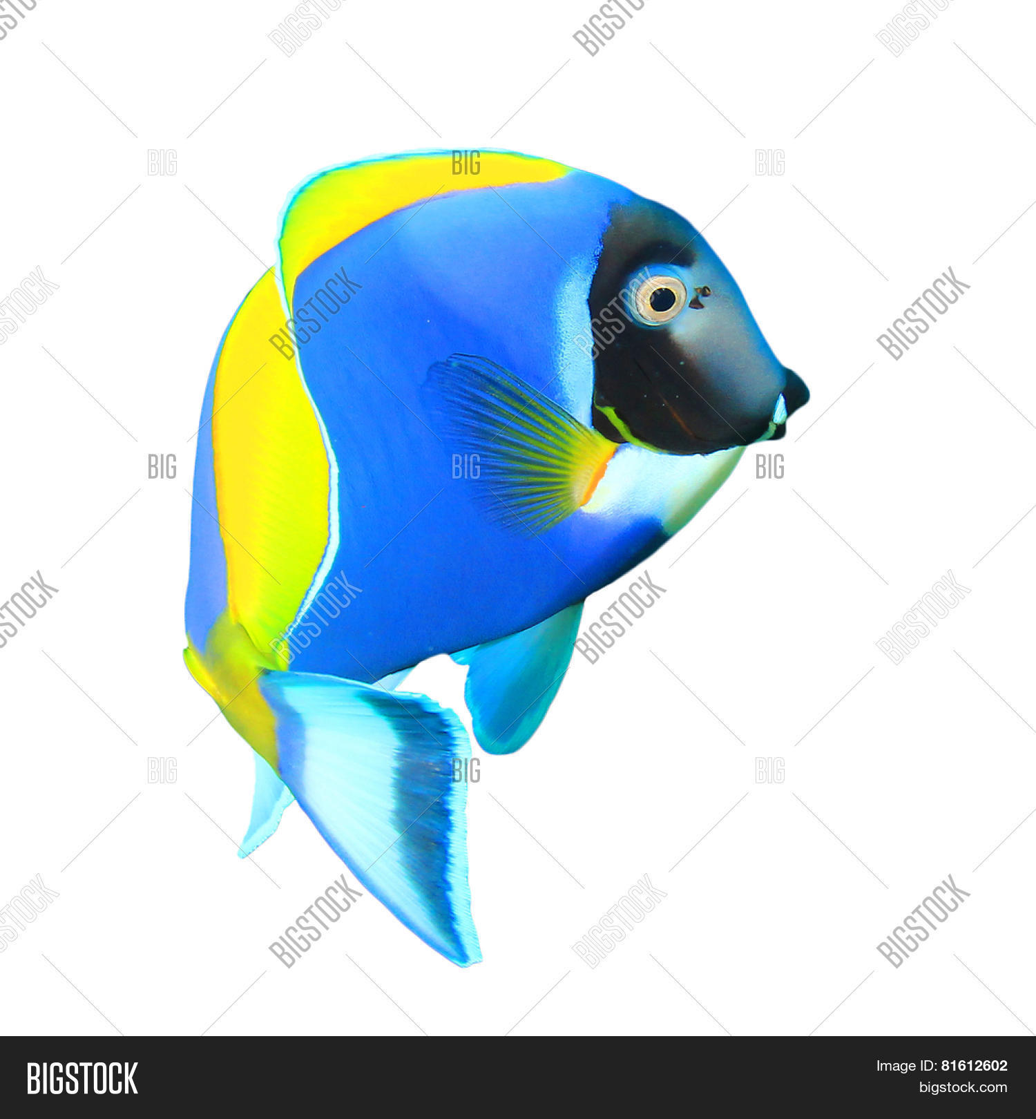Tropical Fish Isolated Image & Photo (Free Trial) | Bigstock