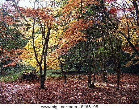 Autumn at Cefn Onn Park
