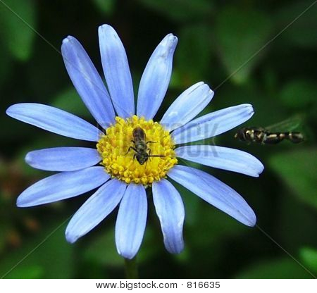 Blue flower and bugs.