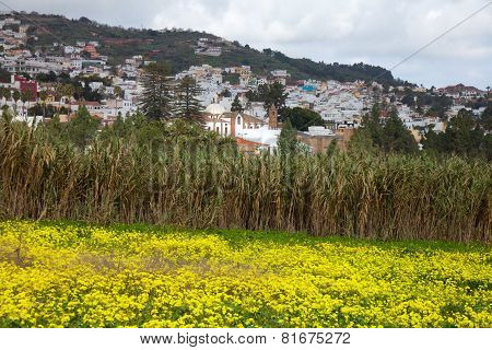 Inland Gran Canaria view towards Historical town Teror over a field of flowering oxalis poster