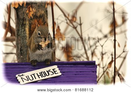 Squirrel Sitting On A Nut House