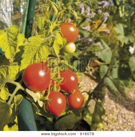 Garden Organic Ryton Ryton Gardens Warwickshire Midlands England