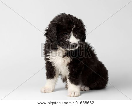 Mixed Breed Black Puppy Sits and Pitifully Looks