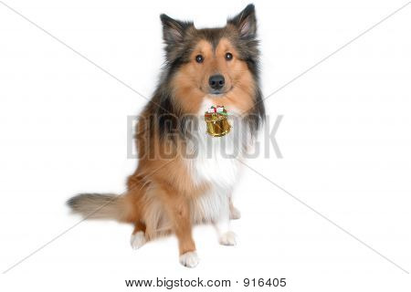 cute dog with christmas red drum close-up poster