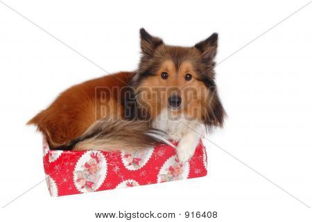 cute dog christmas or birthday gift close-up poster