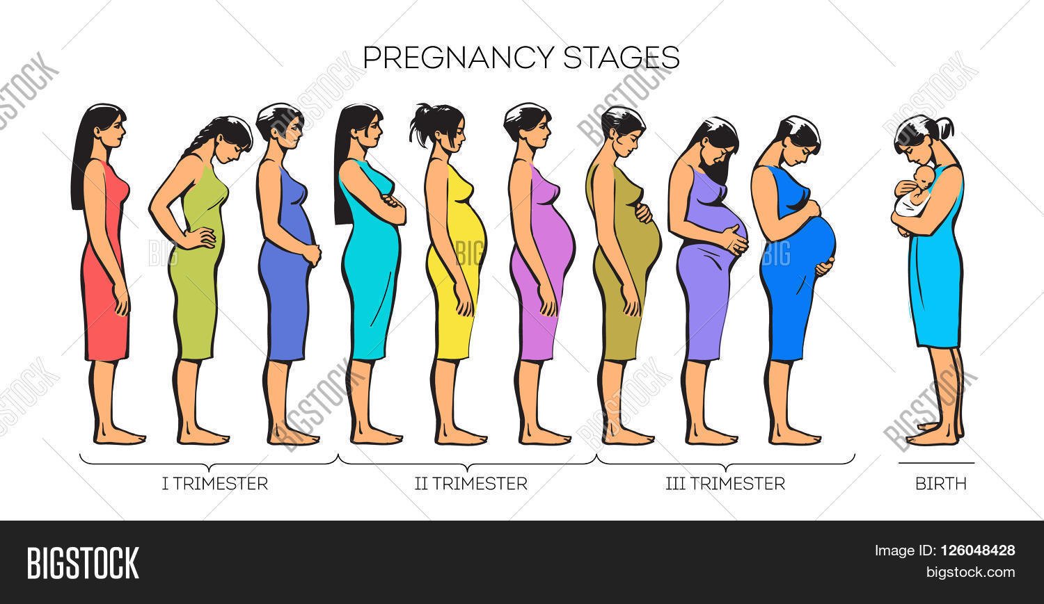 Stages Pregnancy  Image  U0026 Photo  Free Trial