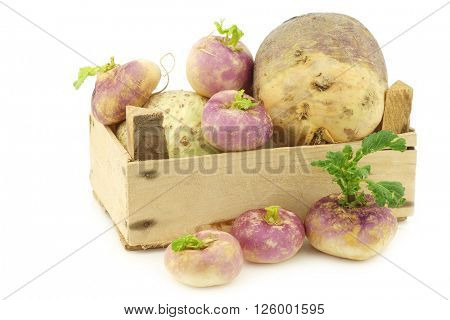 freshly harvested spring turnips (Brassica rapa) and  common turnip in a wooden crate on a white background